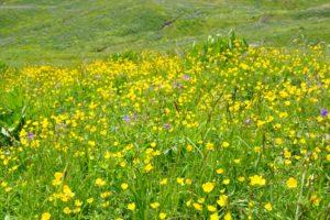 Cure détox de printemps