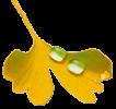 Logo Katia Leouffre